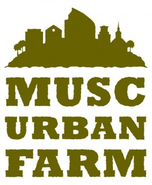 MUSC urban farm